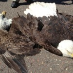 Fighting Eagles Crash Land On Airport Runway