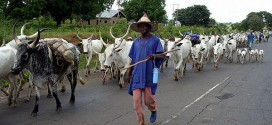 Cattle Breeders Association Hails FG, Pledges To Work With Security Agencies