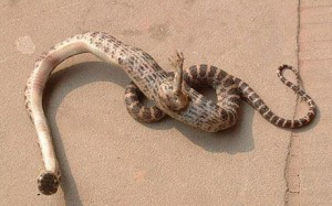 See Snake With Foot Found In China