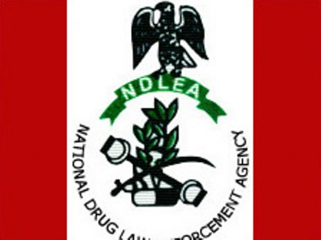Ndlea Arrest 32 Year Old 400 Level Student With 1 250kg Of