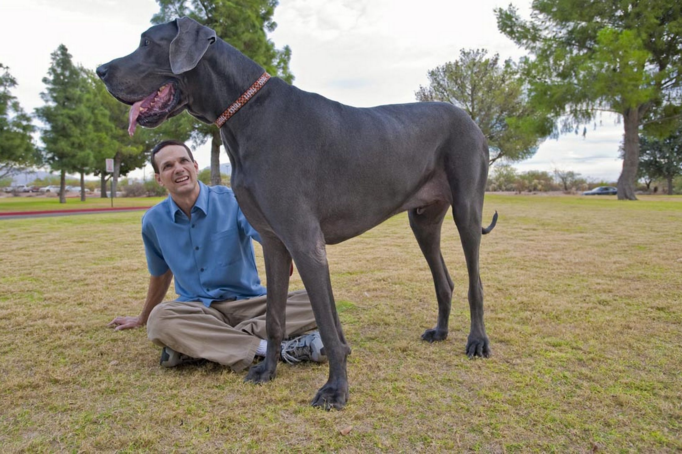 Tallest dog ever - photo#15