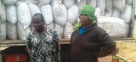 Two People Were Caught With 646 Bags of Marijuana Worth about 11 Million Naira