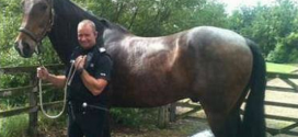 Dumb Crime: Thief Nabbed After trying To Outrun Police Horse From A Crime Scene