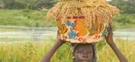 Raise Local Production Before Banning Importation Of Rice, Civil Servants Urge FG