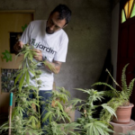 Uruguay To Become First Country To Legalize Marijuana Trade