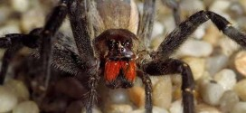 Top 10 Things You Need to Know About World's Deadliest Spider