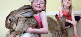 World's Biggest Rabbit Eats £2,500 Worth of Food a Year
