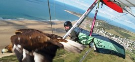 This Man Learned to FLY Just To Soar Through The Air With Pet Golden Eagle
