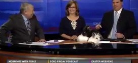 News Anchors Left Stunned as Rabbits Have s*x On Studio Desk in Live Easter Broadcast