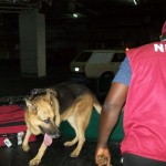 Man, 39, Nabbed By NDLEA In Bid To Smuggle 'Weed' To China