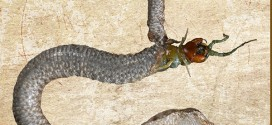 Escape Of Life: Centipede Eats Its Way Out Of Snake