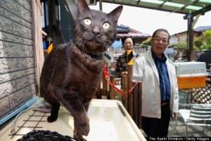 Tohoku Cat, Missing Since 2011 Disaster, Reunited With Owners