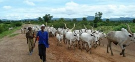 Exclusive: 'Benue state must strategize to avoid another Fulani Herdsmen massacre'