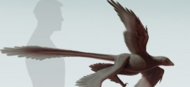 Weird Newfound Dinosaur Had Four 'Wings' & Very Long Tail Feathers, Scientists Say