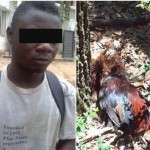 UNBELIEVABLE: 19 yr old defiles chicken to death in Ondo, says a spirit directed him to do so (PHOTOS)