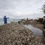 33 Tons Of Dead Fishes Evacuated from Mexico River