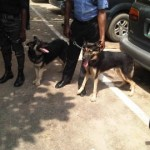 Police Parade Dogs That Attacked 4Yr-Old Boy In Lagos
