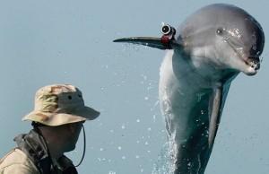 dolphins13n-1-web
