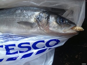 Tongue-Eating Louse Found In Supermarket Fish Freaks Out Unsuspecting Customer
