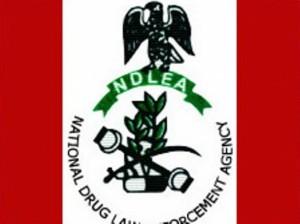 NDLEA-Logo