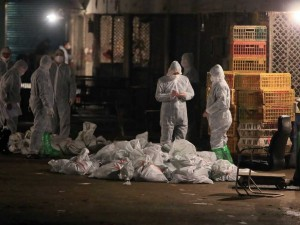 Shanghai Poultry Markets Shut As Traces Of Bird Flu Is Found