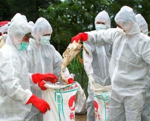 bird flu