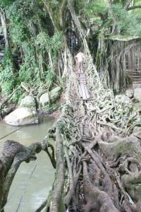 root-bridge-Indonesia4