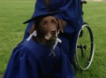 Service Dog Arrives At College Graduation In Cap And Gown, Becomes A Celebrity