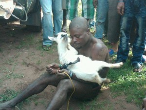File: goat thief