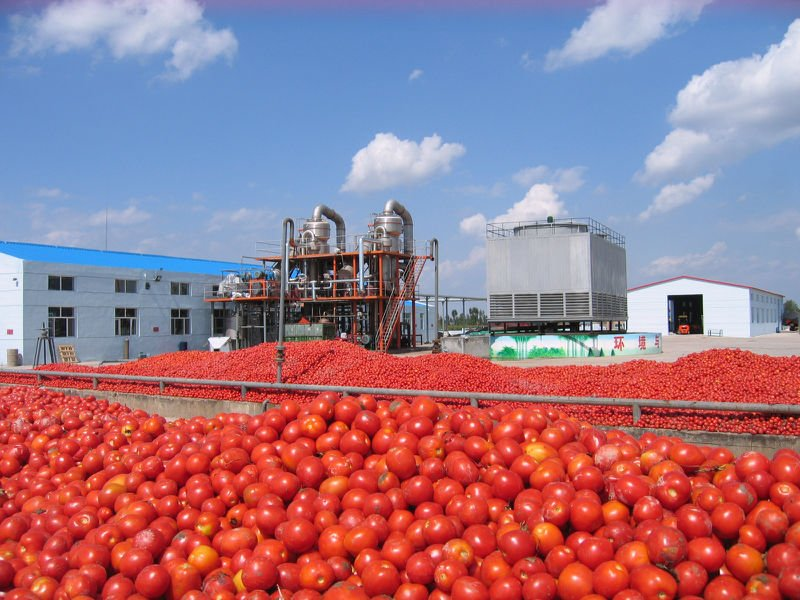 Image result for How To Start Tin Tomato Paste Production In Nigeria