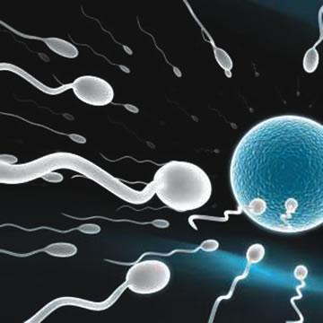 sperm_cells