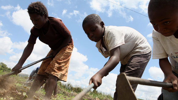 wd-zimbabwe-farm-cp-7867706