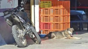 Huachito-dog2-550x309