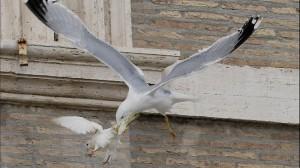 vat-peace-dove