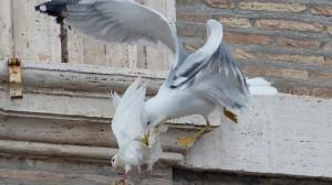 vatican-pope-doves1