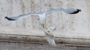 vatican-pope-doves2