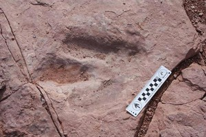 140312-dinosaur-track-jms-2104_f61fb18c824f2e630b662e1cf8007ceb