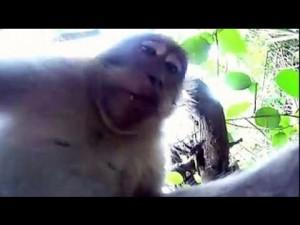 monkey-steals-camera-take-monkey-selfie