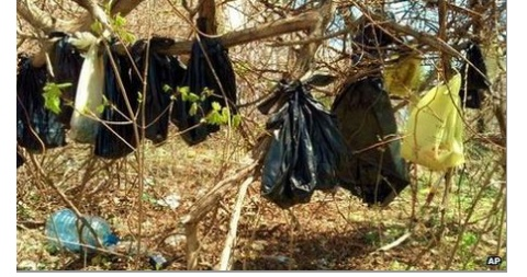 Strange Stuff: Dead cats found hung from NY trees