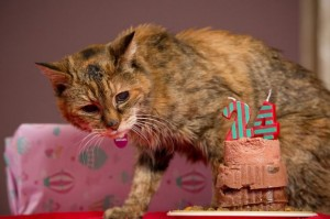 PAY--Poppy-the-Moggy