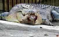 Boy Eaten By Crocodile In Papa New Guinea