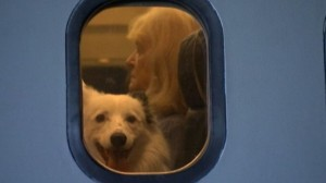 Aviation-Themed Film Studio Opens Fear of Flying School for Dogs