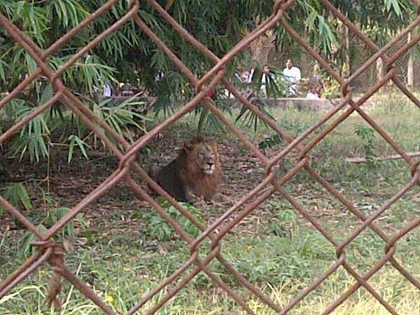 lion_-_escapes