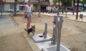 Spanish Town Installs World's First Public Toilet for Dogs