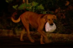 Lilica-the-dog