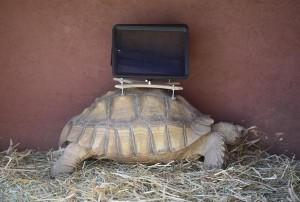 Meet 21st Century iPad-wearing Tortoises