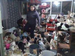 Woman Turns Her Apartment into Hospice for 175 Terminally Ill Cats