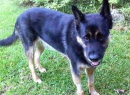 Police Officer Resigns After Shooting Dog