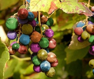 rainbow-grapes-550x465