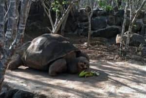World Famous Tortoise 'Pepe The Missionary' Dies At Age 60